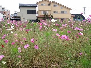 kosumosu_fukigaeekimae1