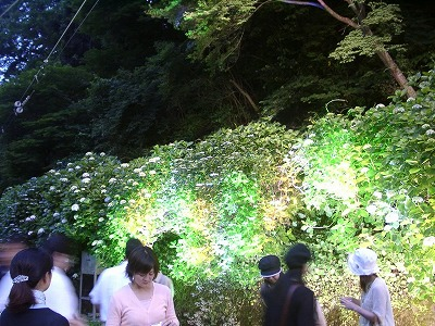 miyanoshita_coctail