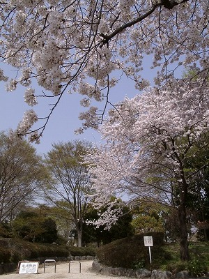 swakura_minumagreen1