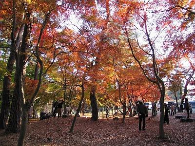 Tsukinoiwamomijipark07111