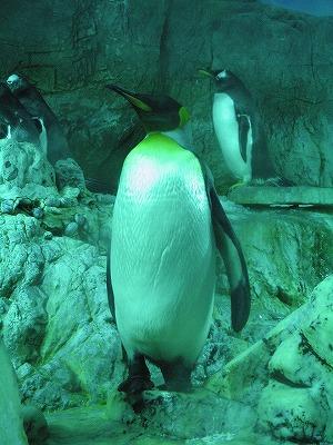Penguin_kaiyukan