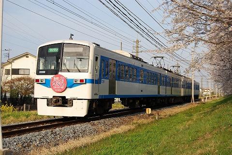 Chichibu6000sakura