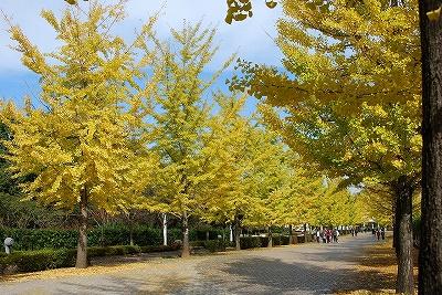 Icho_chichibumusepark