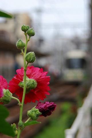 Flowerwithtoden