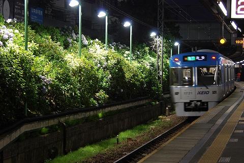 Ajisai_higashimatsubara