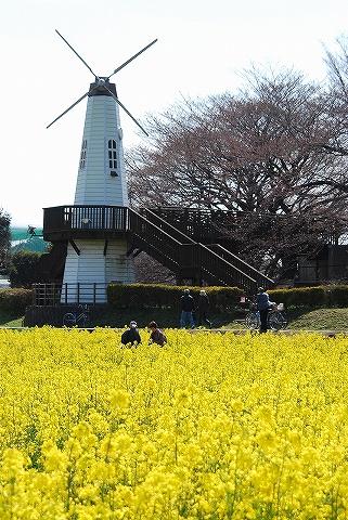 菜の花@見沼田んぼ'10.3.27