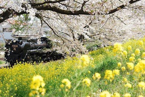 秩父C58363@ひろせ野鳥の森'11.4.16-4
