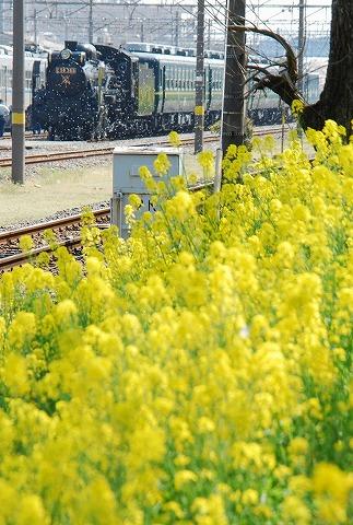 秩父C58363@ひろせ野鳥の森'11.4.16-3