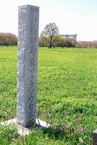 桜草自生地石碑