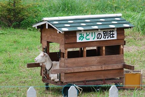 みどり@武蔵横手'11.6.5