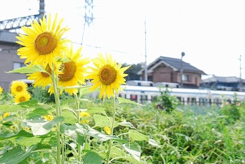 東武8000系@七里'11.8.7-2