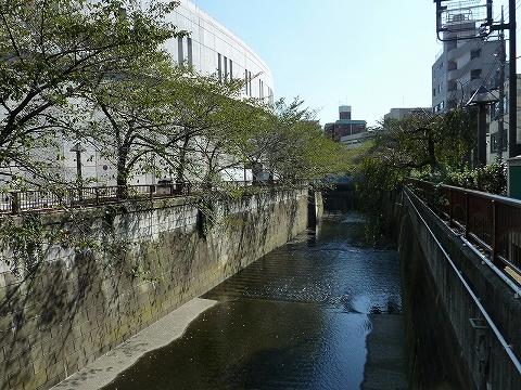 目黒川'11.10.27