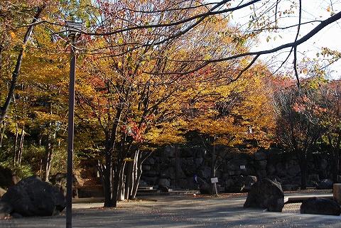 飛鳥山公園'11.11.26