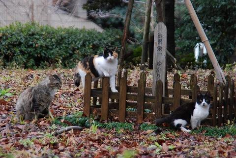 ネコ@飛鳥山公園'12.1.22
