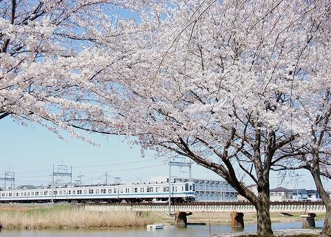 東武8000系@藤の牛島'12.4.8-1