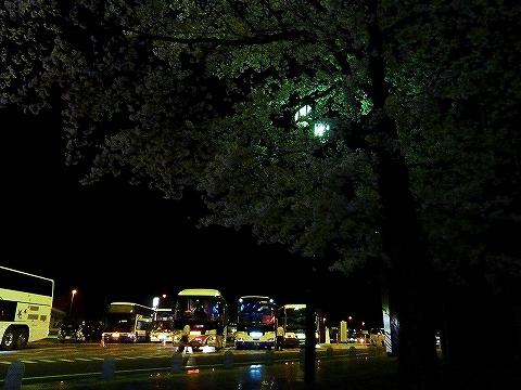 夜桜@多賀SA'13.4.6