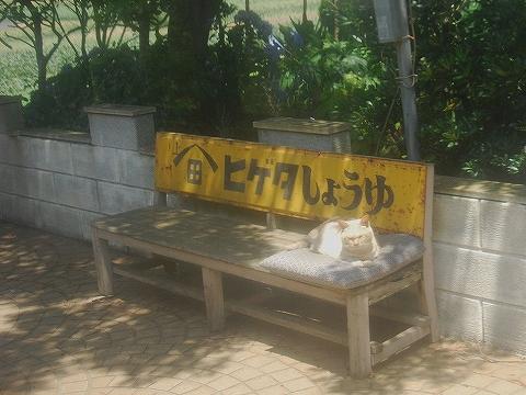ネコ@君ヶ浜'13.7.7