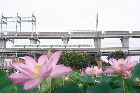 埼玉新都市交通1050系@沼南'13.7.14