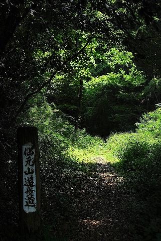 仙元山遊歩道'13.8.31