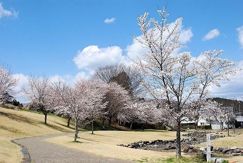 桜@烏山'14.4.5
