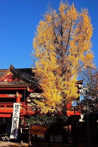 イチョウ@秩父神社'14.11.14