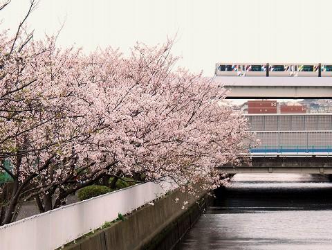 横浜シーサイドライン2000形@並木中央'15.4.4
