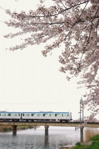 東武60000系@藤の牛島'15.4.5