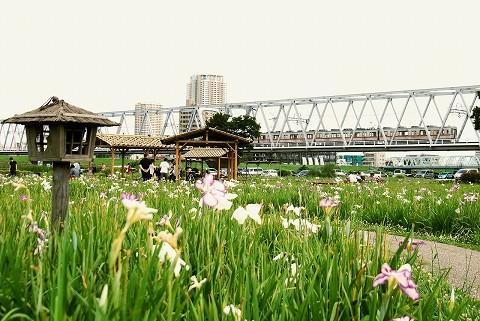 京成3500形@江戸川'15.6.28