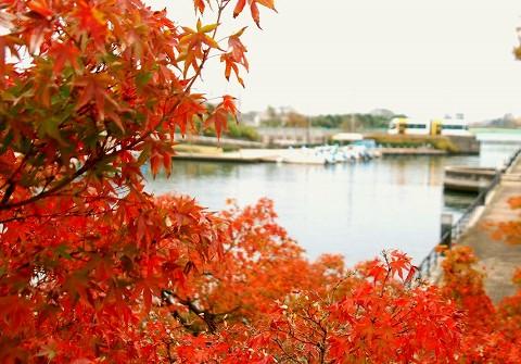 富山ライトレールTLR0600形@岩瀬浜'15.11.22-4