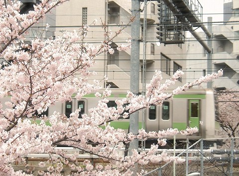E231系@五反田'16.4.2