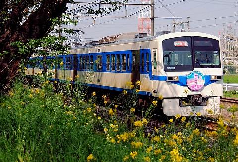 秩父鉄道6000系@ひろせ野鳥の森'16.4.16-2