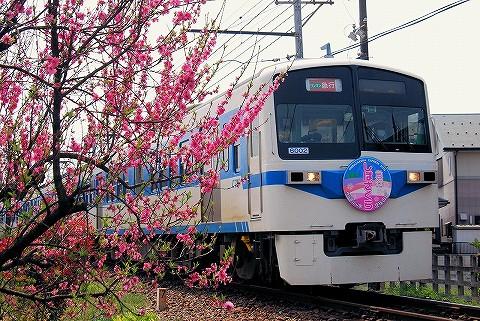 秩父鉄道6000系@皆野'16.4.16