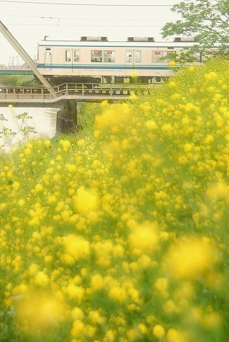東武8000系@藤の牛島'16.4.23