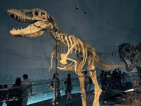 骨格標本@福井県立恐竜博物館'16.9.18