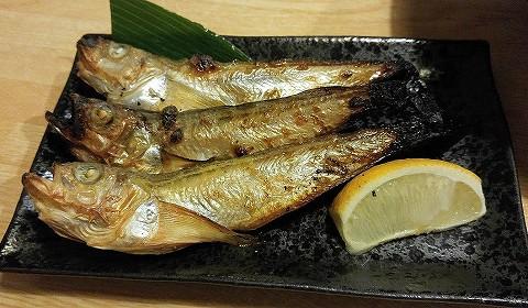 ハタハタ@鳥取大善'17.9.29