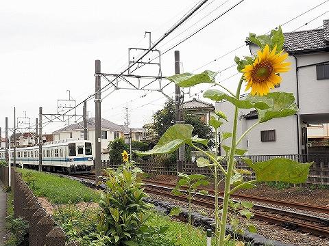 東武8000系@坂戸'18.8.12-1
