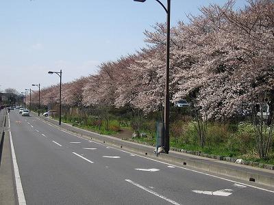 Cherrytree0703minuma