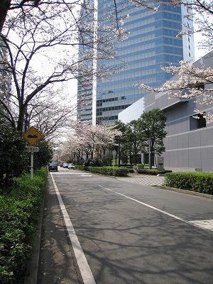 Cherrytree_parkcity