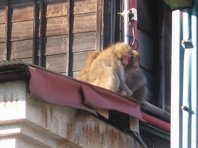 Monkey_ashio061223